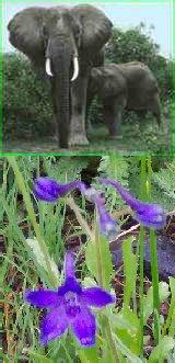 elephlower